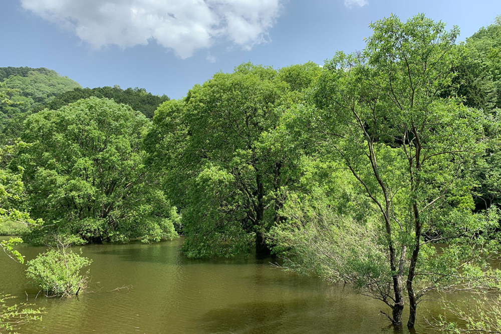 奈良県宇陀市の室生ダムの水没林を撮影しに行ってきた!!