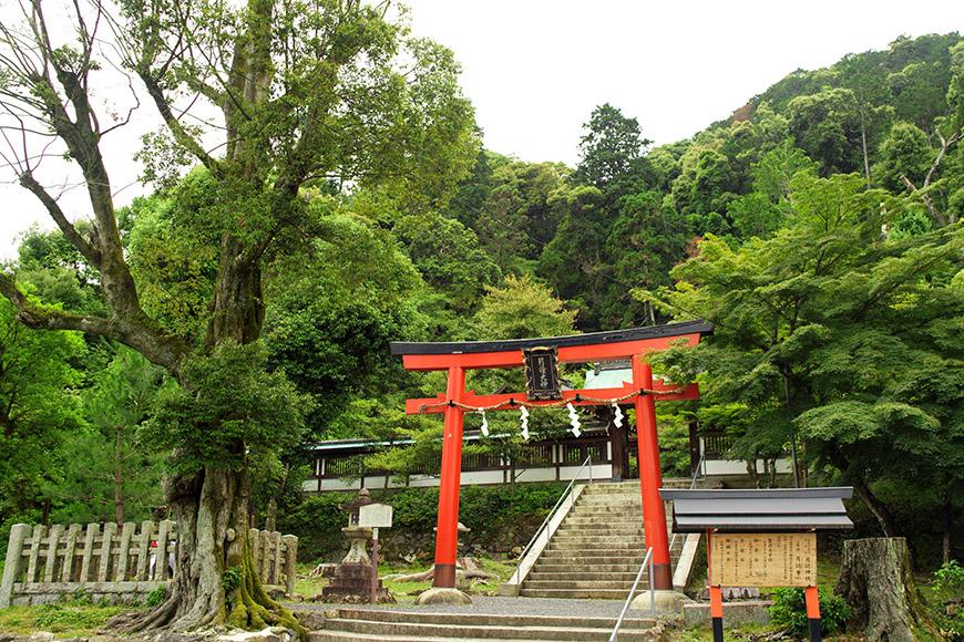 京都・松尾の月読神社に行ってきた/ハッセルブラッド500CMで撮影