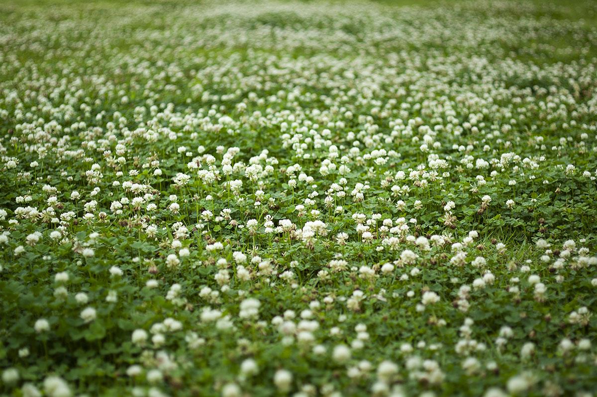 鶴見緑地の公園内