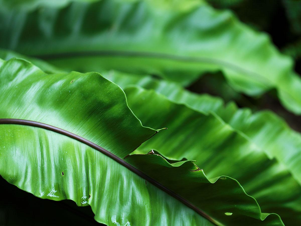 熱帯の植物6