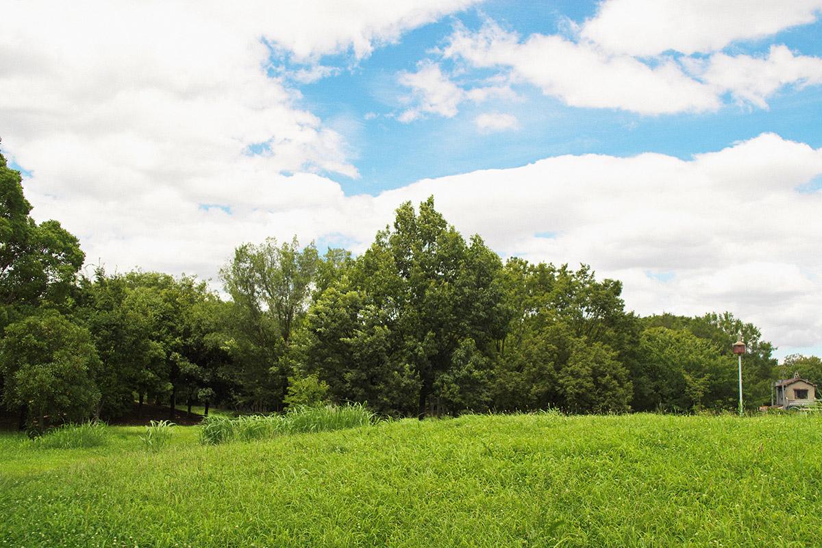 一眼レフで空の撮影をして写真を楽しむ!!今年一眼レフで撮影した空の写真